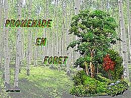 diaporama pps Promenade en forêt