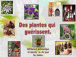 diaporama pps Quelques plantes qui guérissent