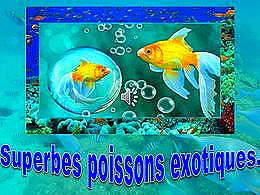 diaporama pps Superbes poissons exotiques