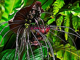 diaporama pps Tacca