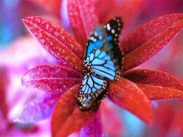 diaporama pps Tendresse des fleurs