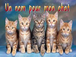 diaporama pps Un nom pour mon chat