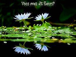 diaporama pps Vous avez dit fleurs