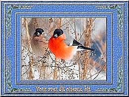 diaporama pps Vous avez dit oiseaux bis