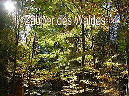 diaporama pps Zauber des Waldes