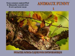 diaporama pps Animaux funny 1