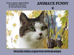 diaporama pps Animaux funny 2
