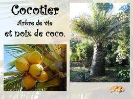 diaporama pps Cocotier et noix de coco