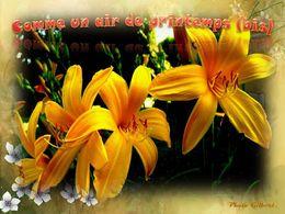 diaporama pps Comme un air de printemps bis