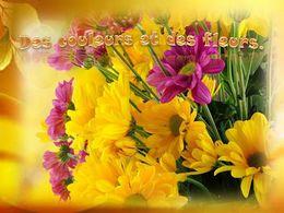 diaporama pps Des couleurs et des fleurs