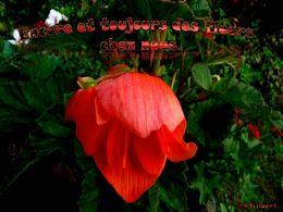 diaporama pps Encore et toujours des fleurs chez nous