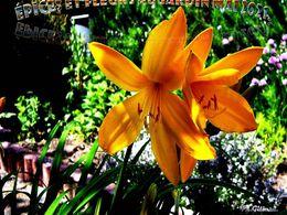 diaporama pps Épices et fleurs au jardin Mai 2021