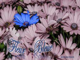 diaporama pps Fleur bleue