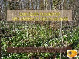 diaporama pps Fleurettes des lisières et sous bois
