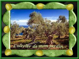 diaporama pps L'olivier de mon jardin