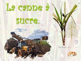 diaporama pps La canne à sucre