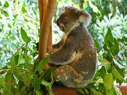 diaporama pps La faune d'Australie