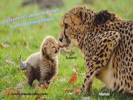 diaporama pps Faune et amour maternel touchant et magnifique