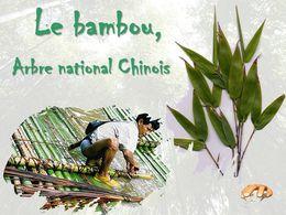 diaporama pps Le bambou