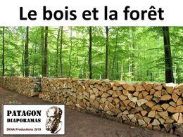 diaporama pps Le bois et la forêt