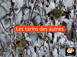 diaporama pps Les tarins des Aulnes