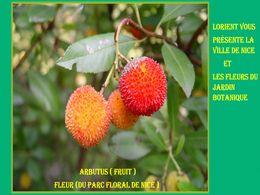 diaporama pps Nice et son jardin botanique
