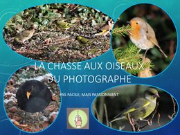 diaporama pps Ma chasse aux oiseaux