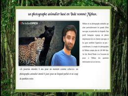 diaporama pps Mithun H – Photographe animalier en Inde