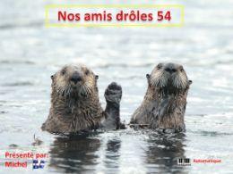 diaporama pps Nos amis drôles 54