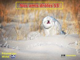 diaporama pps Nos amis drôles 55