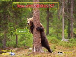 diaporama pps Nos amis drôles 57