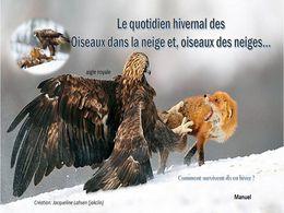 diaporama pps Oiseaux dans la neige