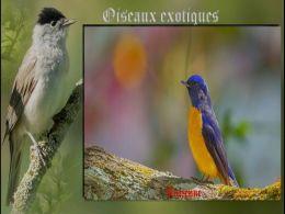 diaporama pps Photos d'oiseaux exotiques