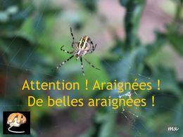 diaporama pps Quelques araignées