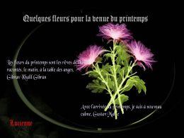 diaporama pps Quelques fleurs pour le printemps
