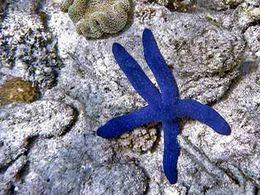diaporama pps Récifs coralliens – Australie 3