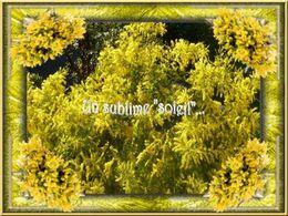 diaporama pps Un sublime soleil