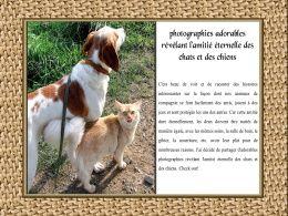 diaporama pps Amitié eternelle chats chiens