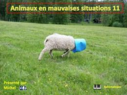 diaporama pps Animaux en mauvaises situations 11