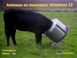 diaporama pps Animaux en mauvaises situations 12