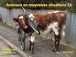 diaporama pps Animaux en mauvaises situations 13