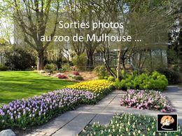 diaporama pps Au zoo de Mulhouse