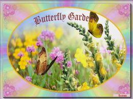 diaporama pps Butterfly garden