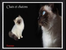 diaporama pps Chats et chatons