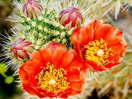 diaporama pps Cholla cactus garden – USA