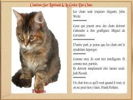 diaporama pps Citations sur les chats