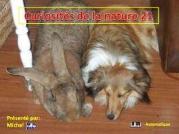 diaporama pps Curiosités de la nature 21