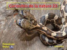 diaporama pps Curiosités de la nature 23