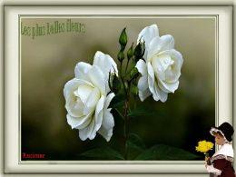 diaporama pps De belles fleurs