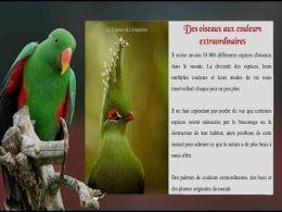 diaporama pps Oiseaux aux couleurs extraordinaires